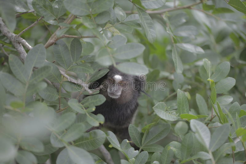 Small monkey hiding in leafy plant stock photography