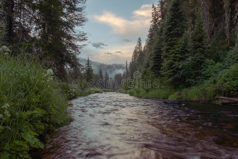 Small mountain creek in the forest royalty free stock photos