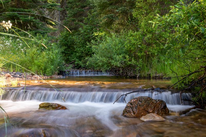 Small mountain creek in the forest stock photo