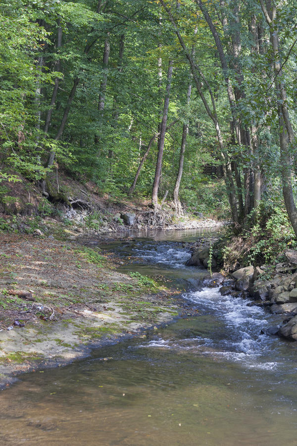 Small mountain river. In Carpathians, Ukraine royalty free stock photos
