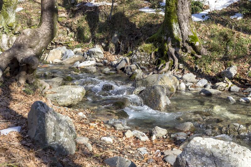 Small mountain river on a winter day Greece, Evia island. A small, mountain, cold, fast river flows among the forest on a sunny, winter day Greece, Evia island stock photo
