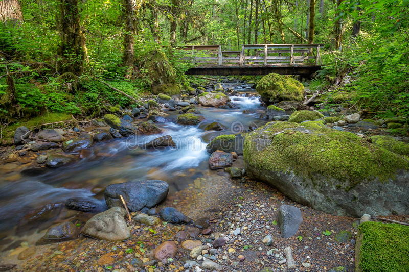 Small Mountain Stream and Bridge. A small mountain stream and bridge near Sweet Home Oregon royalty free stock images
