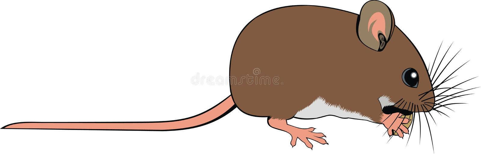 Small mouse stock illustration
