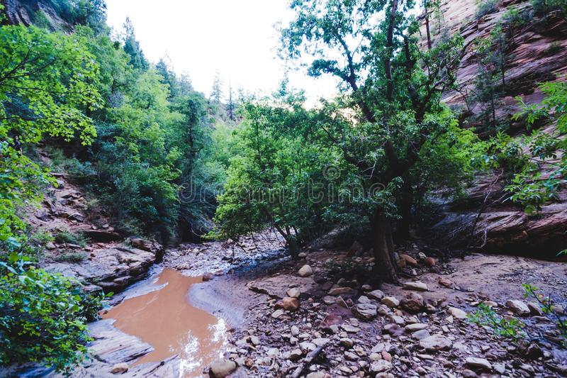 Small muddy creek flowing through the canyon along the Observation Point trail in Zion National Park Utah royalty free stock images