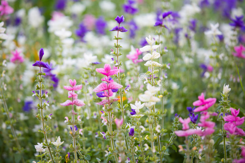 Small multicolored flowers royalty free stock photos