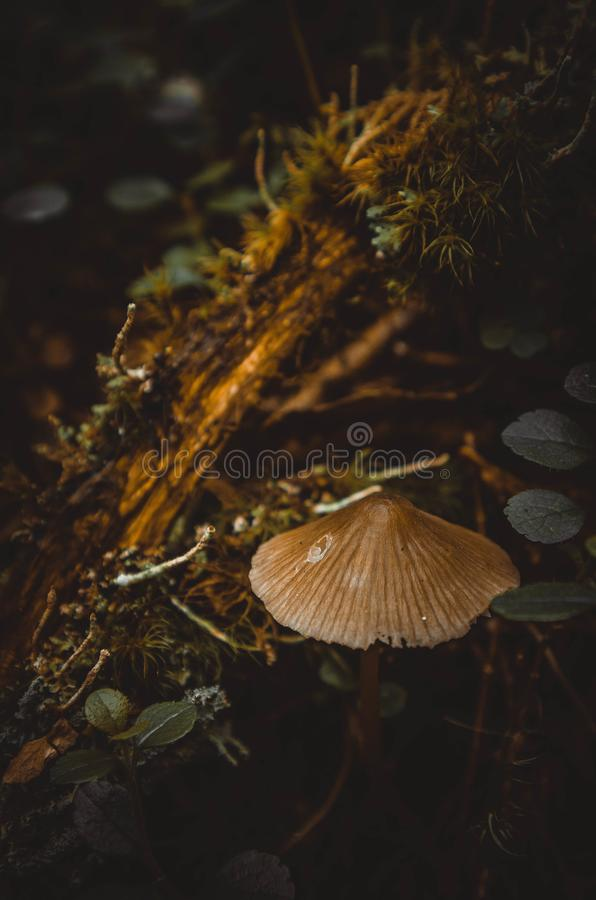 A small mushroom on the background of plants royalty free stock photo