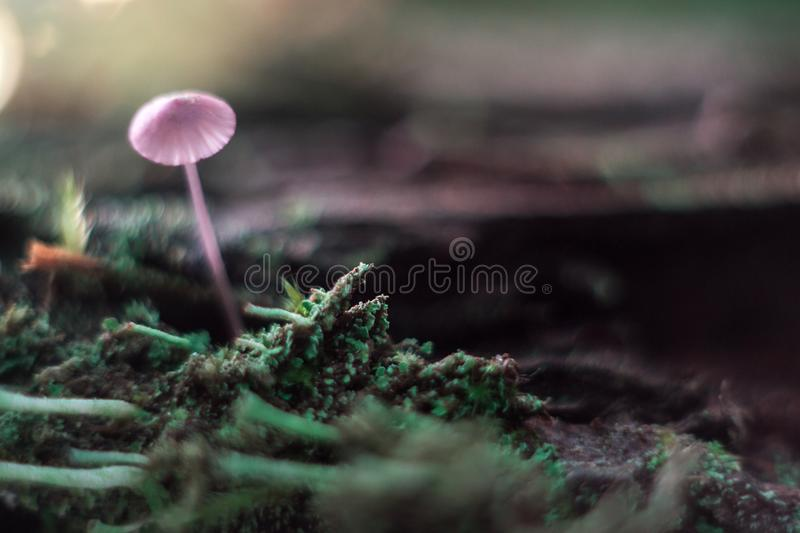 Small mushroom on a stump macro in the forest. royalty free stock photography