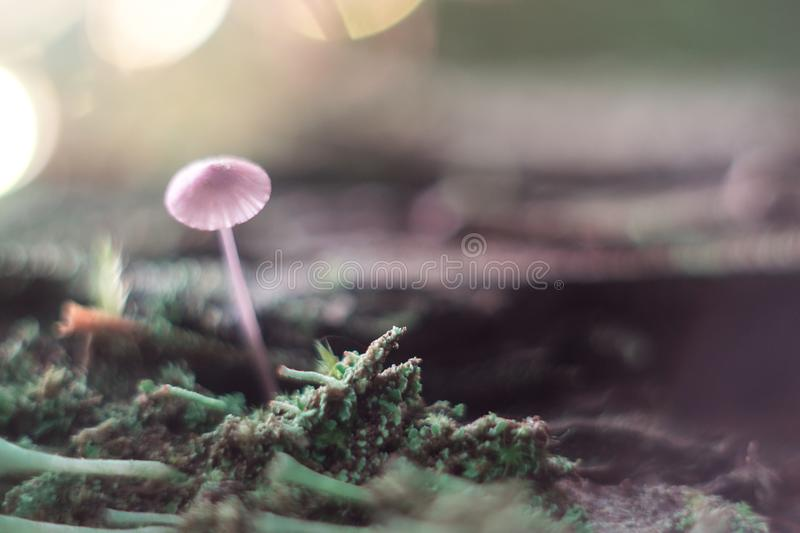 Small mushroom on a stump macro in the forest. royalty free stock images