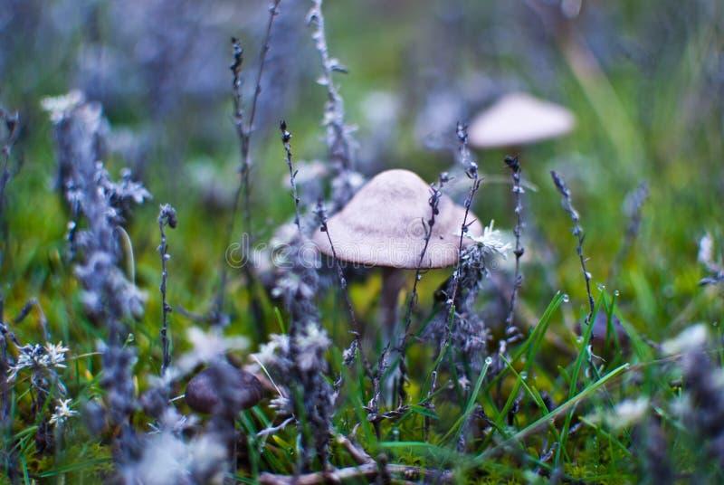 Small mushrooms toadstool warm autumn royalty free stock image
