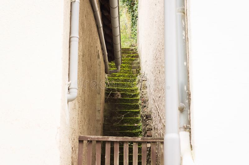 Small and narrow scale with grass royalty free stock images
