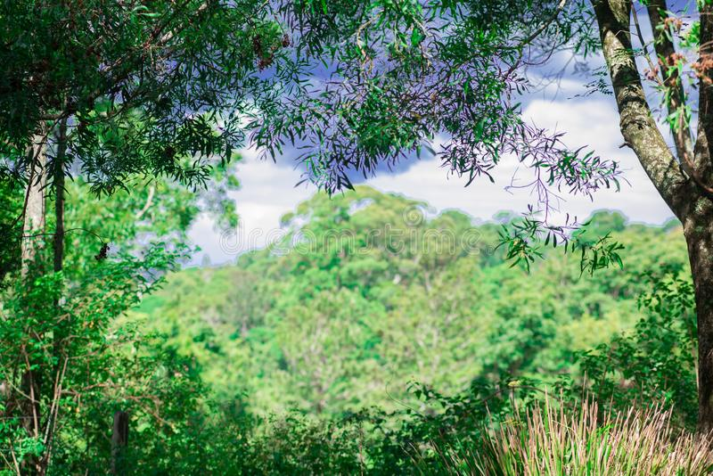 Small Nature taken nearby Brisbane city in Queensland, Australia. Australia is a continent located in the south part of the earth. In summer time, international royalty free stock photography