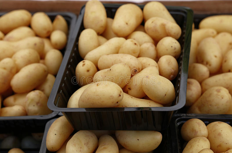 Small new potato in plastic display boxes close up royalty free stock image