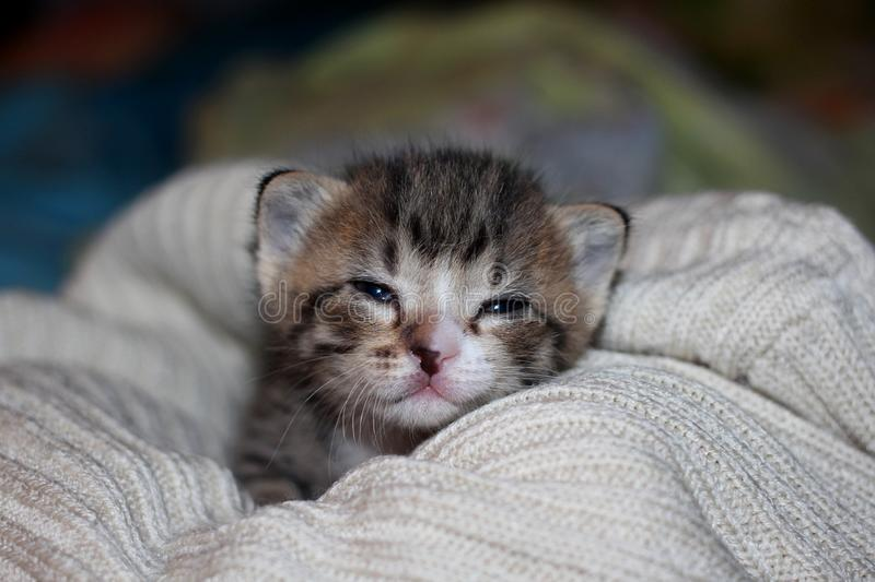 A small newborn kitten with a spot on her face looking straight stock images