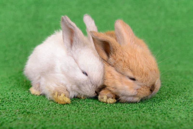 Download Small Newborn Rabbits Stock Photography - Image: 32008892