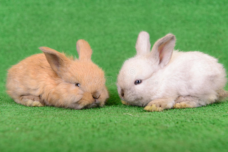 Download Small newborn rabbits stock image. Image of cony, background - 32009035