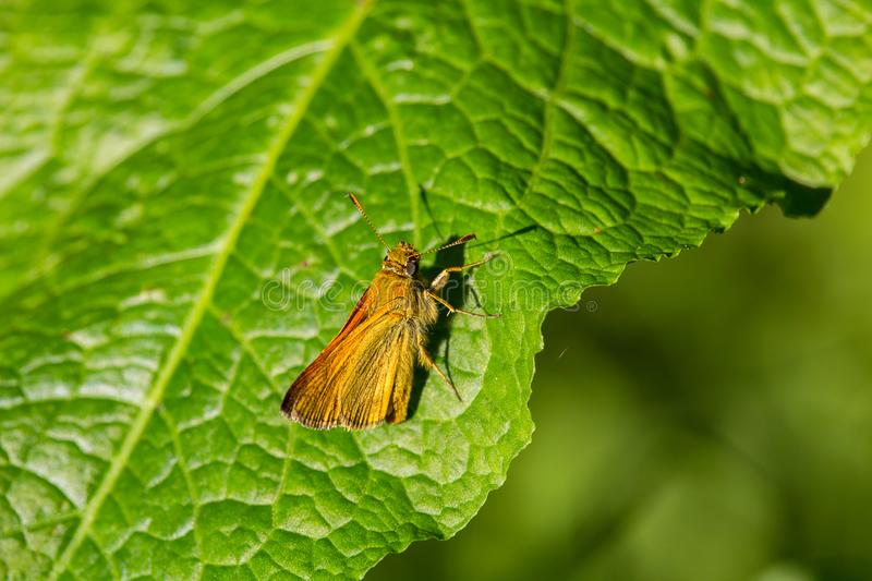 Small nice orange butterfly on green leaf.  royalty free stock images