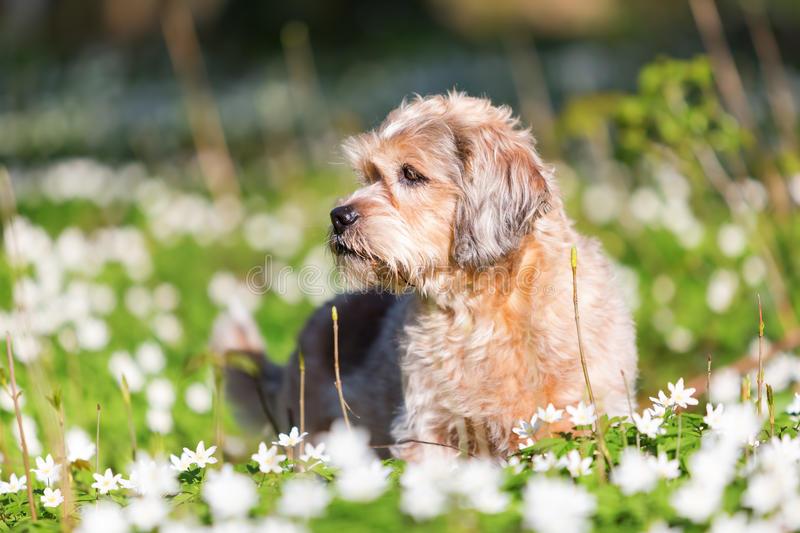Small old dog in the thimbleweeds royalty free stock image