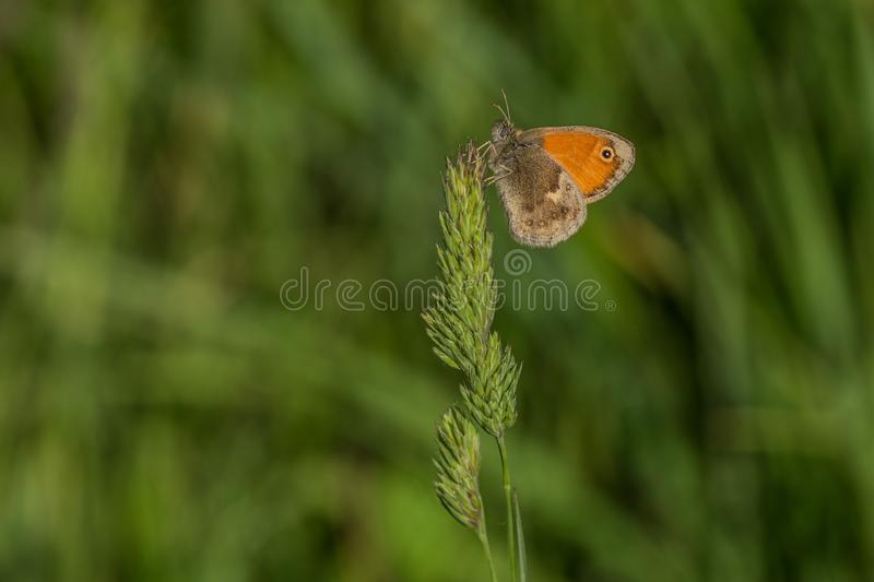 Small orange butterfly on grass, blurry background royalty free stock photography
