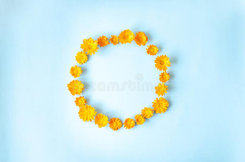 Small orange flowers on a light blue background royalty free stock photography
