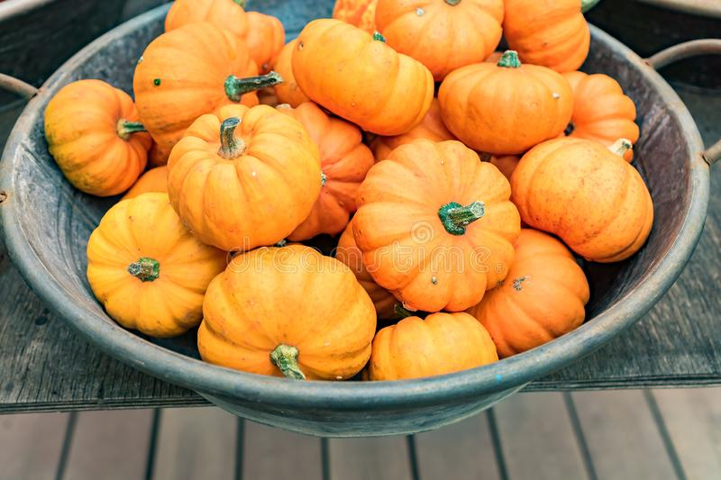 Small orange pumpkins in metall basket. Rustic style. Stall at Farmers market.  stock photography