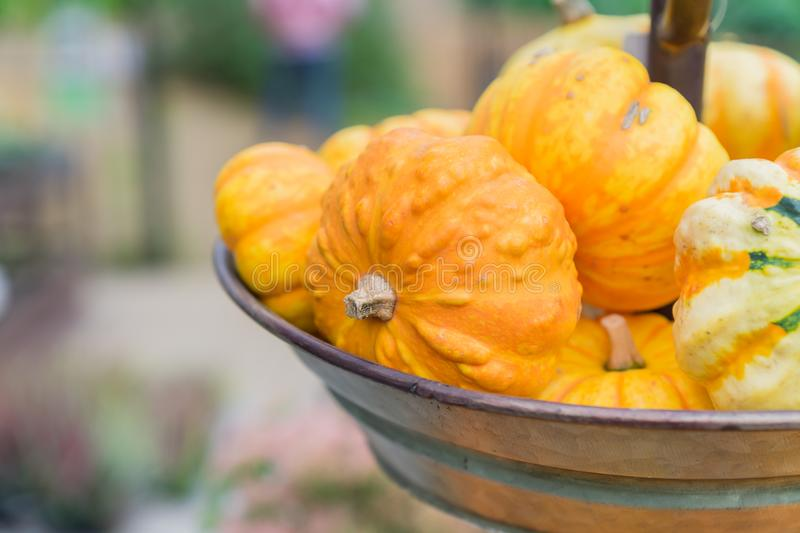 Small orange pumpkins in metall basket. Rustic style. Stall at Farmers market.  royalty free stock photography