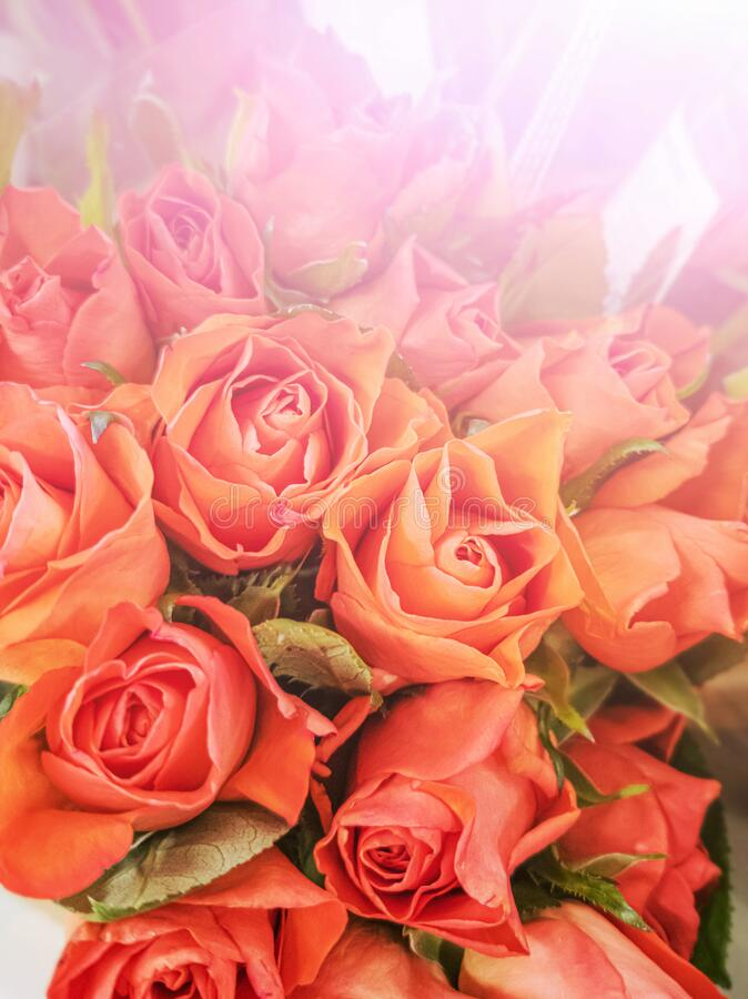 Small orange roses close-up in a flower shop. The concept of spring, holiday, women`s day, flower business royalty free stock photography
