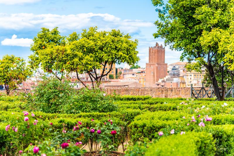 Small orange tree in garden of Roman Forum, Rome, Italy.  royalty free stock image
