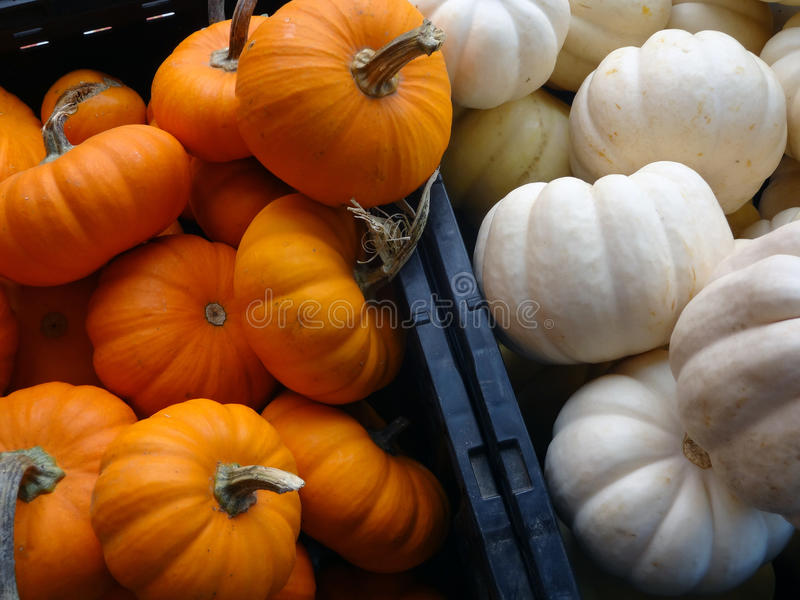Small Orange and White Pumpkins in crates. Small orange and white pumpkins piled in crates at a local farmers' market stock photography