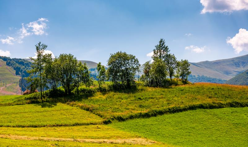 Small orchard on a grassy rural field royalty free stock photos