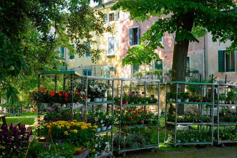 Flower display in Venice neighborhood stock image