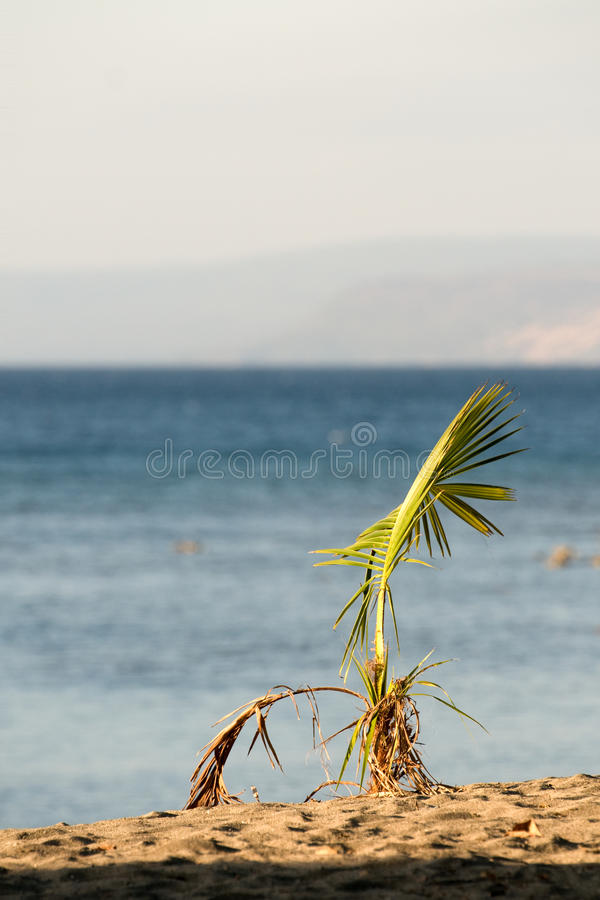 Small palm royalty free stock image