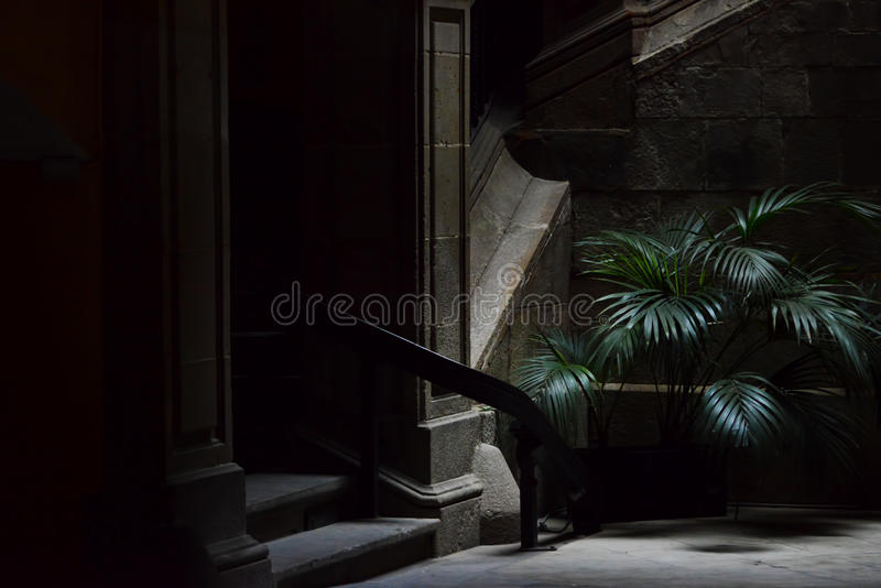 Small palm tree in the dark street, gothic quarter in Barcelona. Barrio gotico royalty free stock image