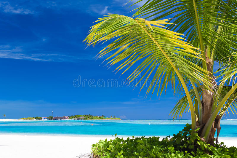 Download Small Palm Tree Hanging Over Blue Lagoon Stock Image - Image: 22588821