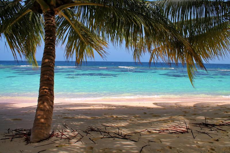 Sandy beach with short palm trees and ocean in the Maldives. Small palm trees create shade on a sandy beach in the Maldives. The blue ocean is visible beyond the royalty free stock photography