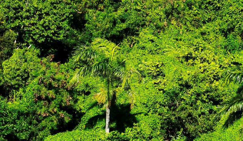 Small part of the tropical forest near Puerto Plata. Drone view of a small part of the tropical forest near the Mount Isabel de Torres in Puerto Plata, Dominican stock images
