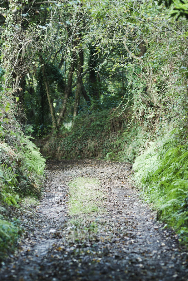 Small Path Stock Image