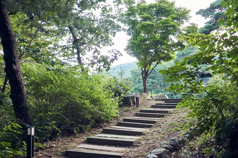 Small path with wooden steps at a forest in Jechun, South Korea stock image