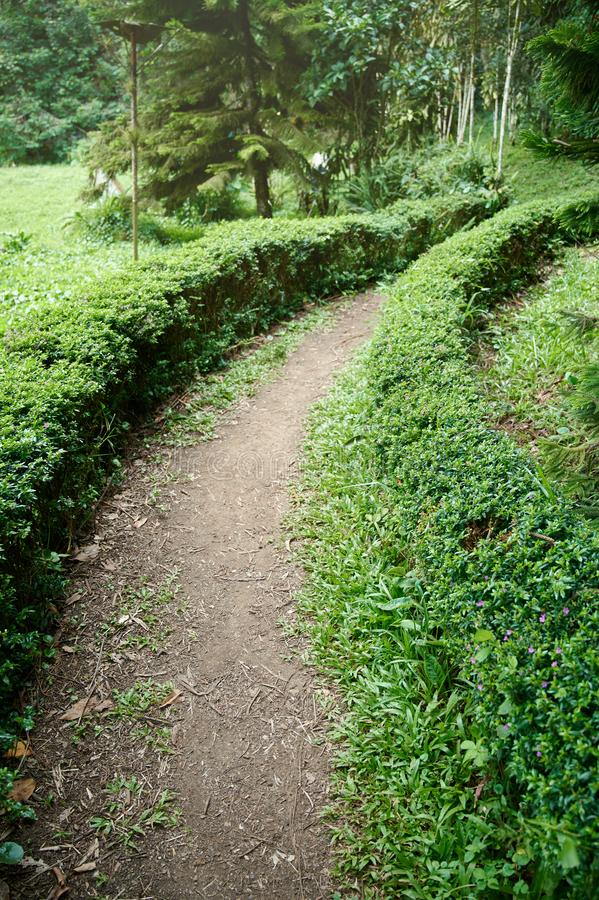 Small pathway in green park royalty free stock photo