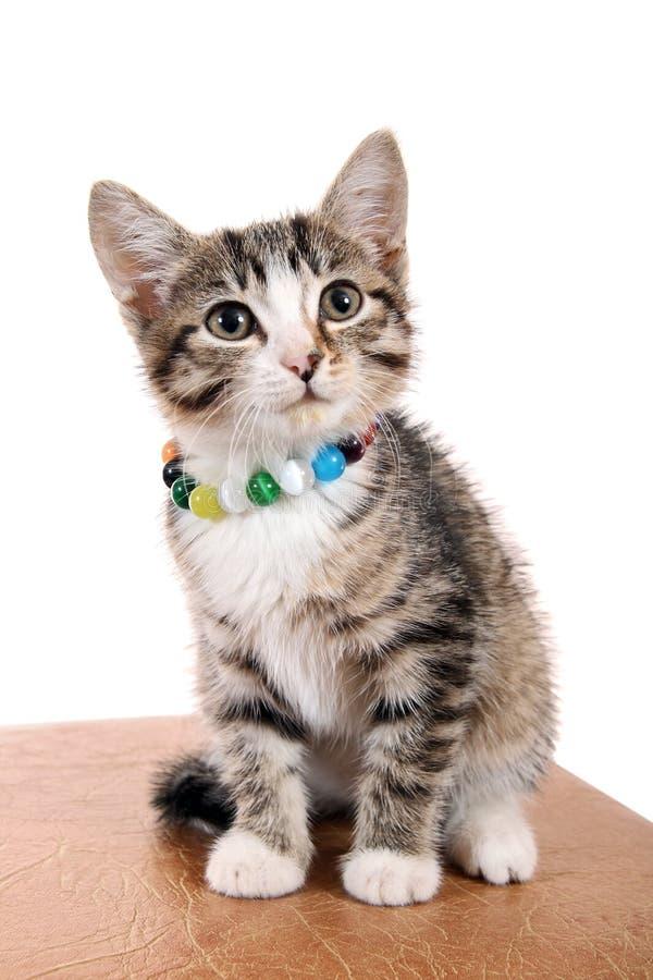 Free Small Pet Royalty Free Stock Photos - 11008038