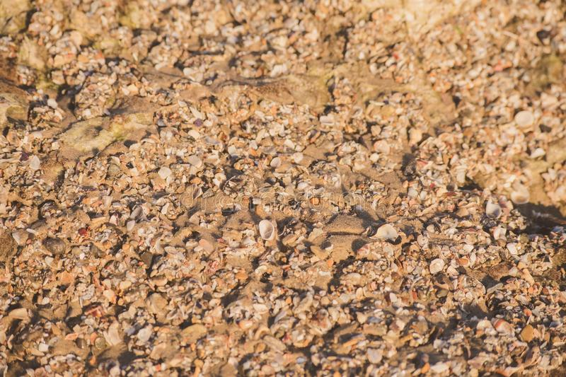 Small sea shells and sand background texture royalty free stock photos