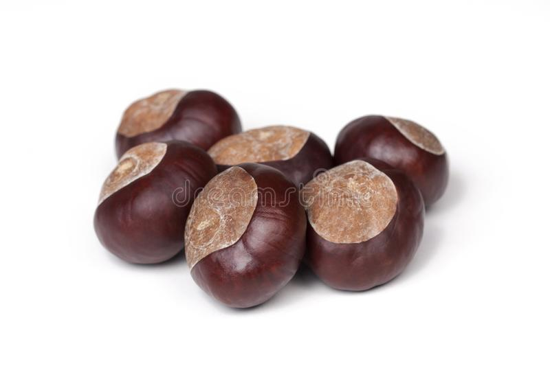 A small pile of chestnuts, conkers isolated on white background, closeup. A small group of chestnuts, a few conkers isolated on white background, closeup royalty free stock photos