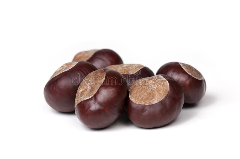 Small pile of fresh chestnuts, conkers isolated on white background, closeup. Small pile of fresh chestnuts, a group of conkers isolated on white background royalty free stock photos