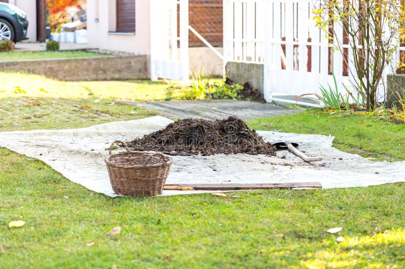 Small pile of rotted manure on tarp in the front yard. Garden shovel and basket near heap. Concept of organic farming stock images