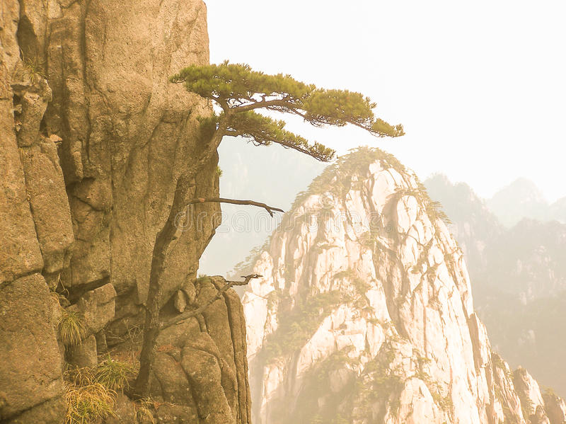 A small pine tree at the edge of the cliff stock photo