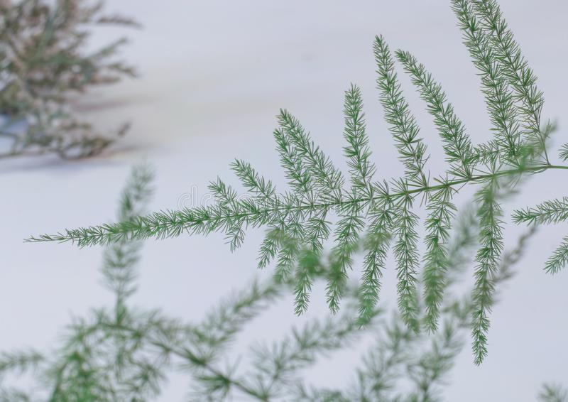 Small pine tree. Small green pine tree on snowy background stock photography