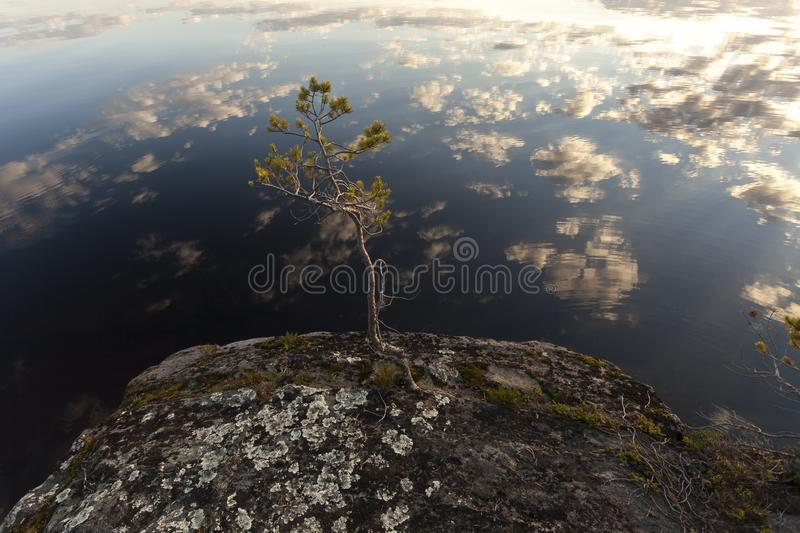 Small pine tree on the stone island in the middle of the lake. Clouds reflection in the water. royalty free stock photo