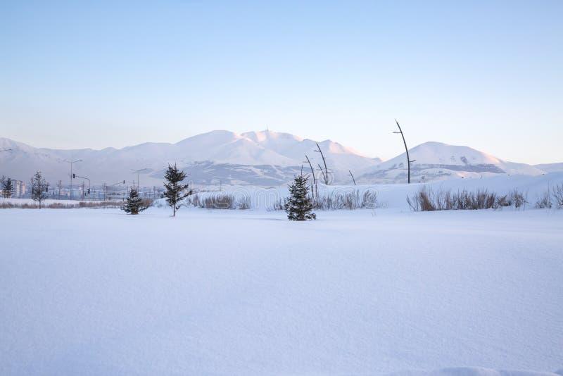 Small pine tress with Palandoken mountains with snow in Erzurum. Turkey royalty free stock photo