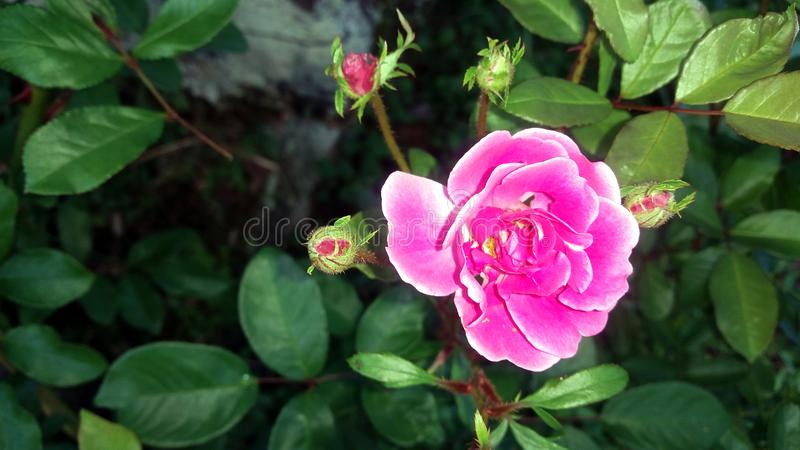 Small pink flower stock photo image of branches small 110489328 download small pink flower stock photo image of branches small 110489328 mightylinksfo