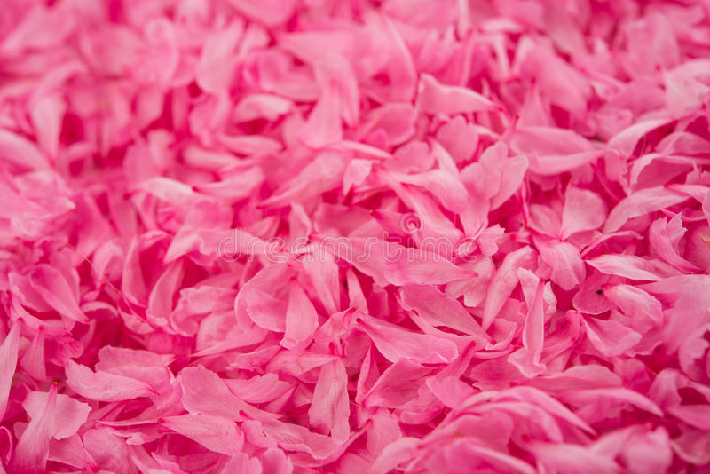 Download Small pink flower petals stock photo. Image of petal - 32402262
