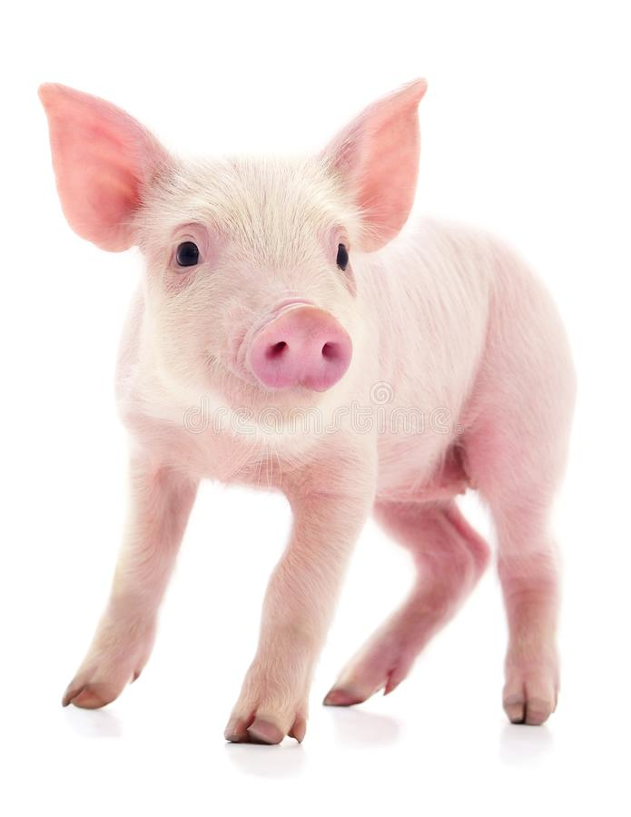 Free Small Pink Pig Isolated Stock Photo - 132852040